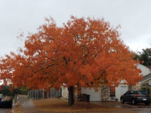 Round Rock Tree Service Declares Winter a Good Time For Tree Trimming